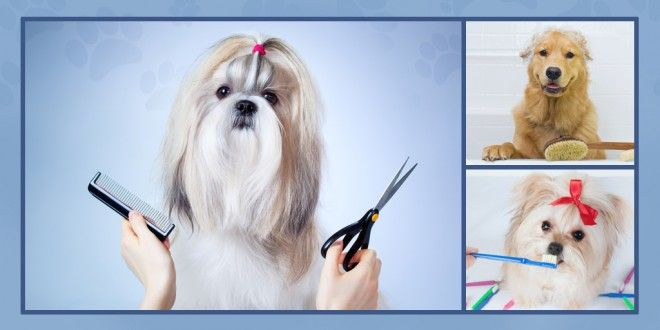 5 Dog Grooming Basics With Images Dog Grooming Puppy Grooming