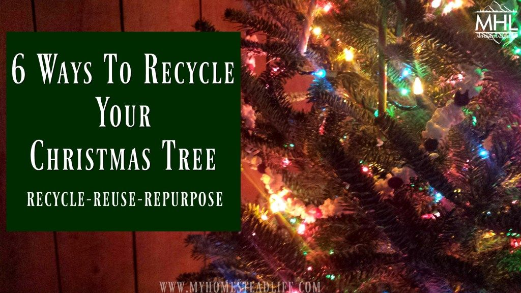 6 Ways To Recycle Your Christmas Tree Recycled Christmas Tree Christmas Tree Tree