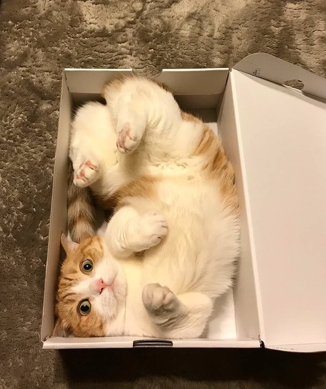 Follow Us Mydreamycats If You Are A Real Cat Lover We Publish Cute Cats Photo And Amazing Videos Cute Cats Photos Cats Cat Day