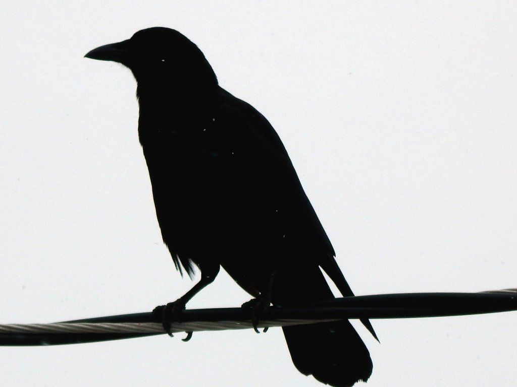 crow on wire in snow storm by sharkbaits on deviantart ravens