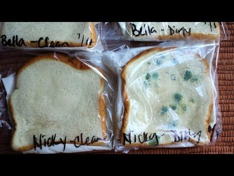 Moldy Bread Science Experiment Wash Your Hands Homeschooling