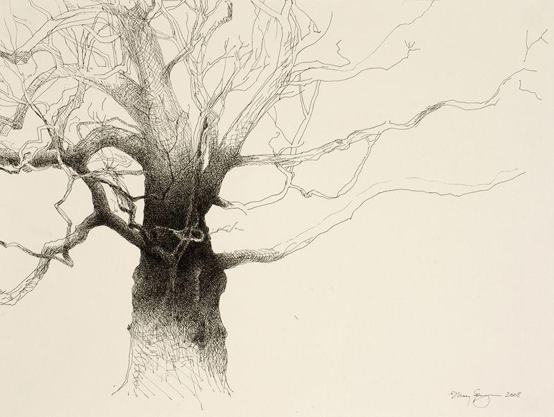 Matsumoto's Blushing Oak, Woodside, California, 2008, by Mary Sprague.