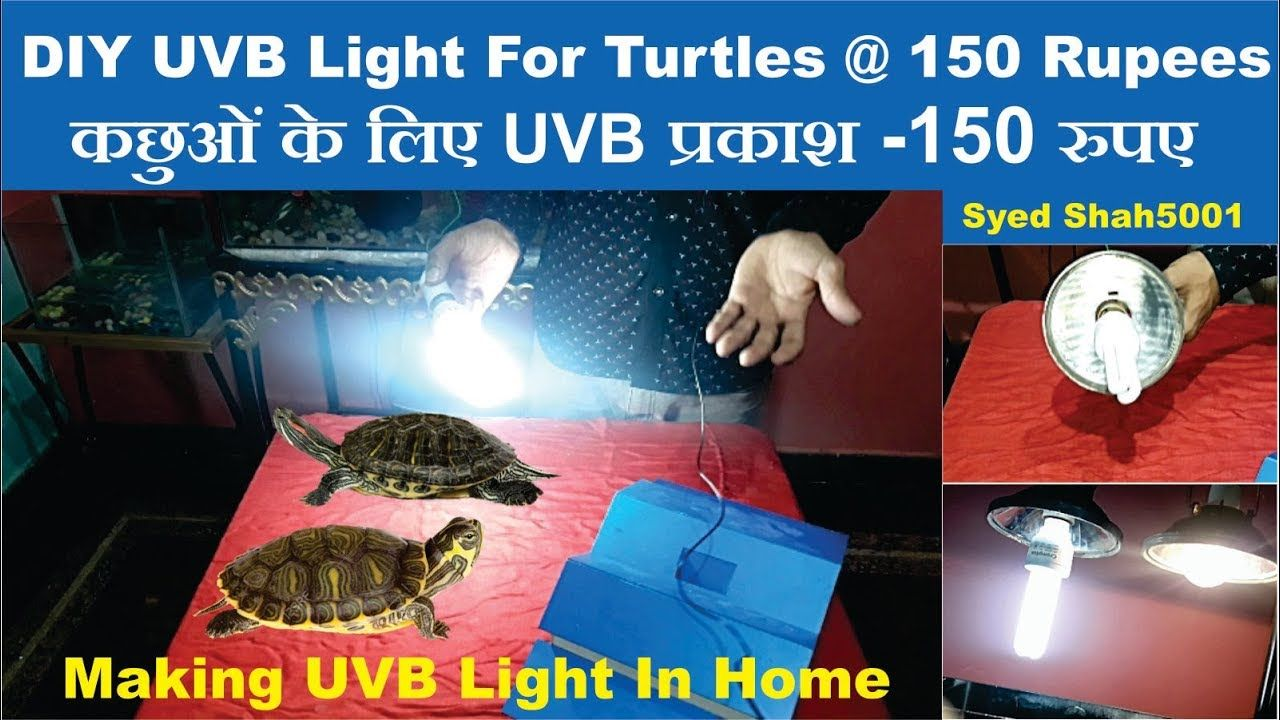 Diy Uvb Light For Turtles At Home At 150rs Hindi Turtle Parrot