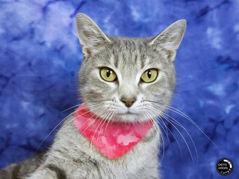 Adopt LUCY on Cat adoption, Cats and kittens, Pets