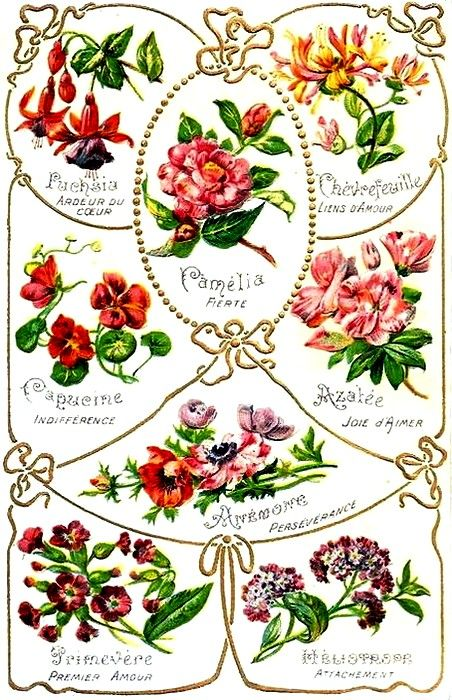 Meanings of flowers (French) Flower meanings, Vintage