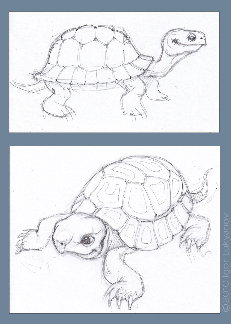 Tortoise sketch drawing art sketches freehand tortoise