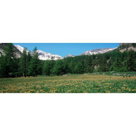 Wildflowers in a field with snowcapped mountain in the background French Riviera Canvas Art - Panoramic Images (27 x 9)