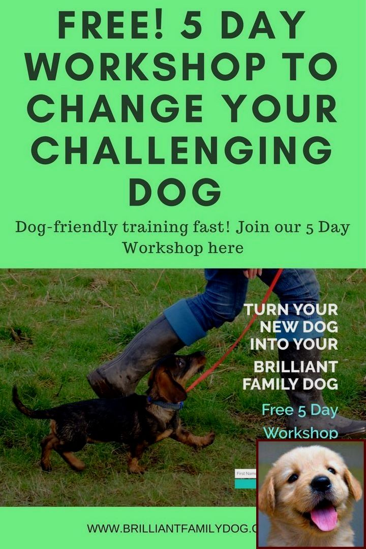 Dog Behavior Training York Pa And Dog Training Classes Near Me
