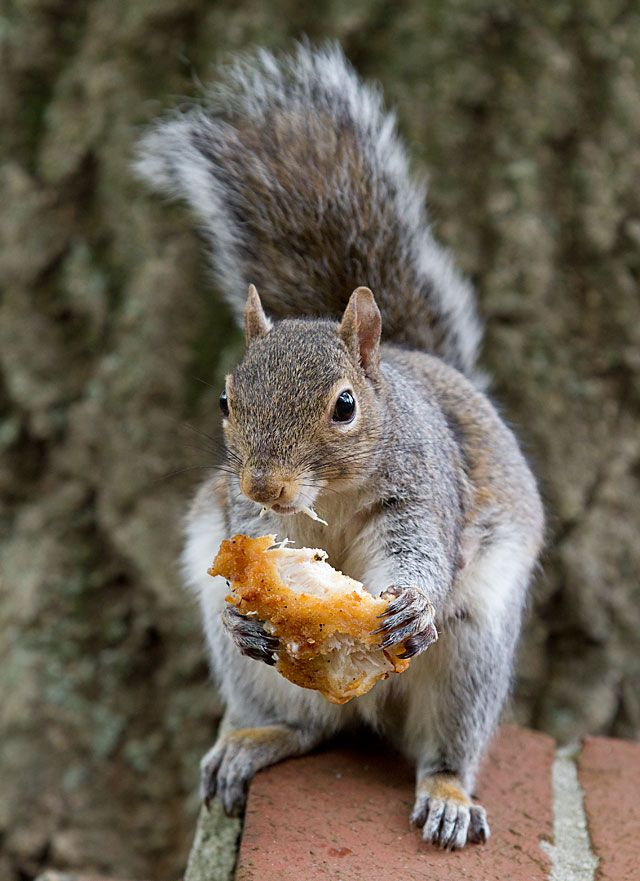 How to take care of a baby squirrel   www ...   Baby Squirrel Diet
