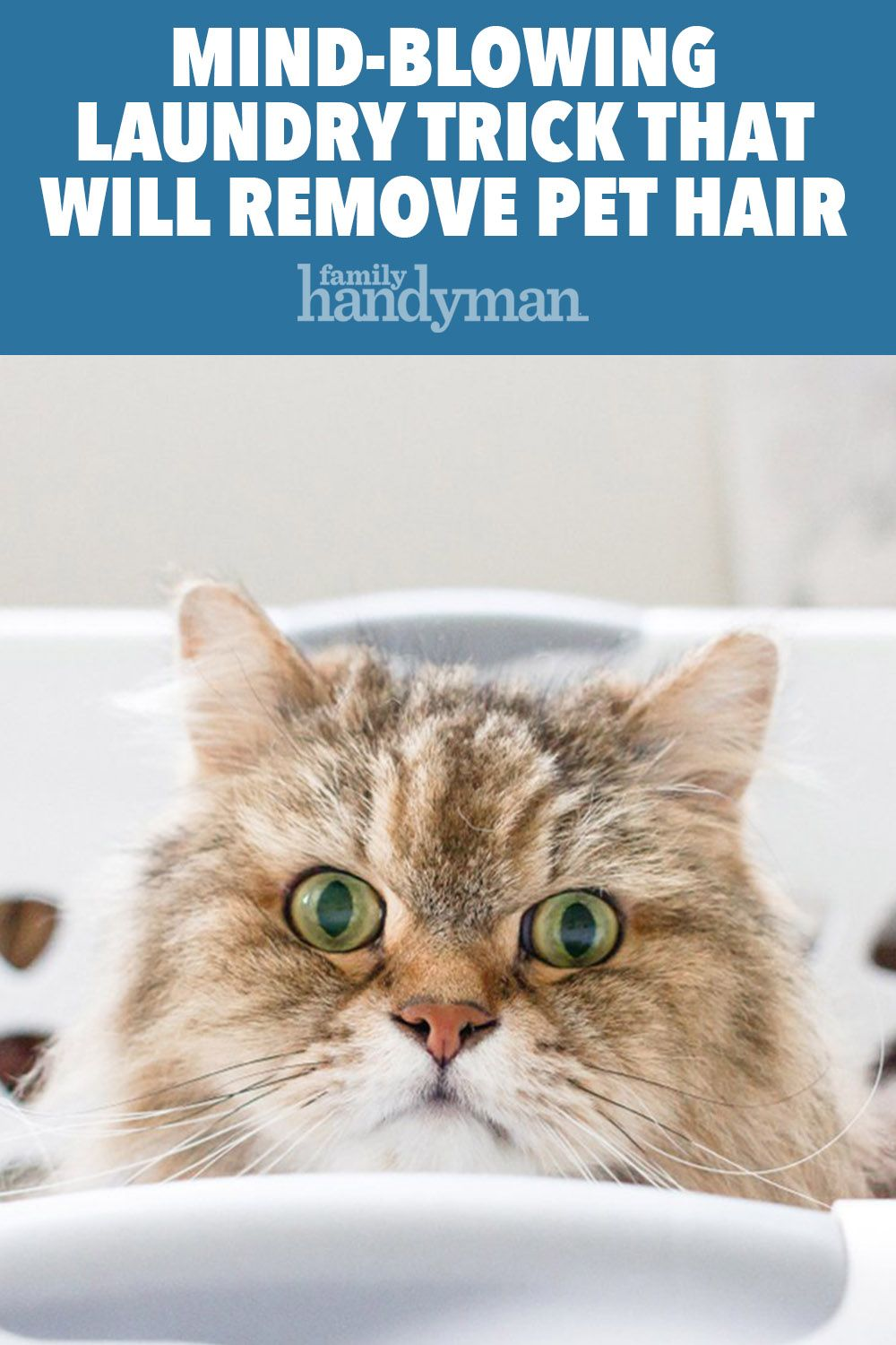 Never Worry About Pet Hair Again With This Secret Laundry Trick Pet Hair Removal Laundry Hacks Pets