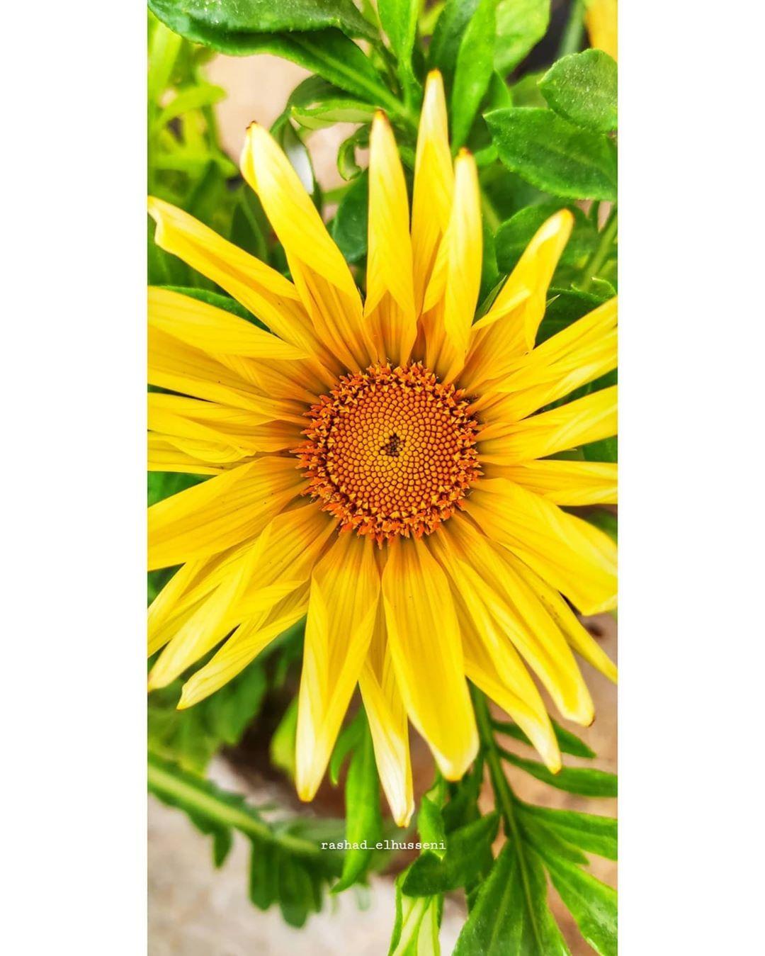 Pin By Rashad Elhusseni On Flower Plants Flowers