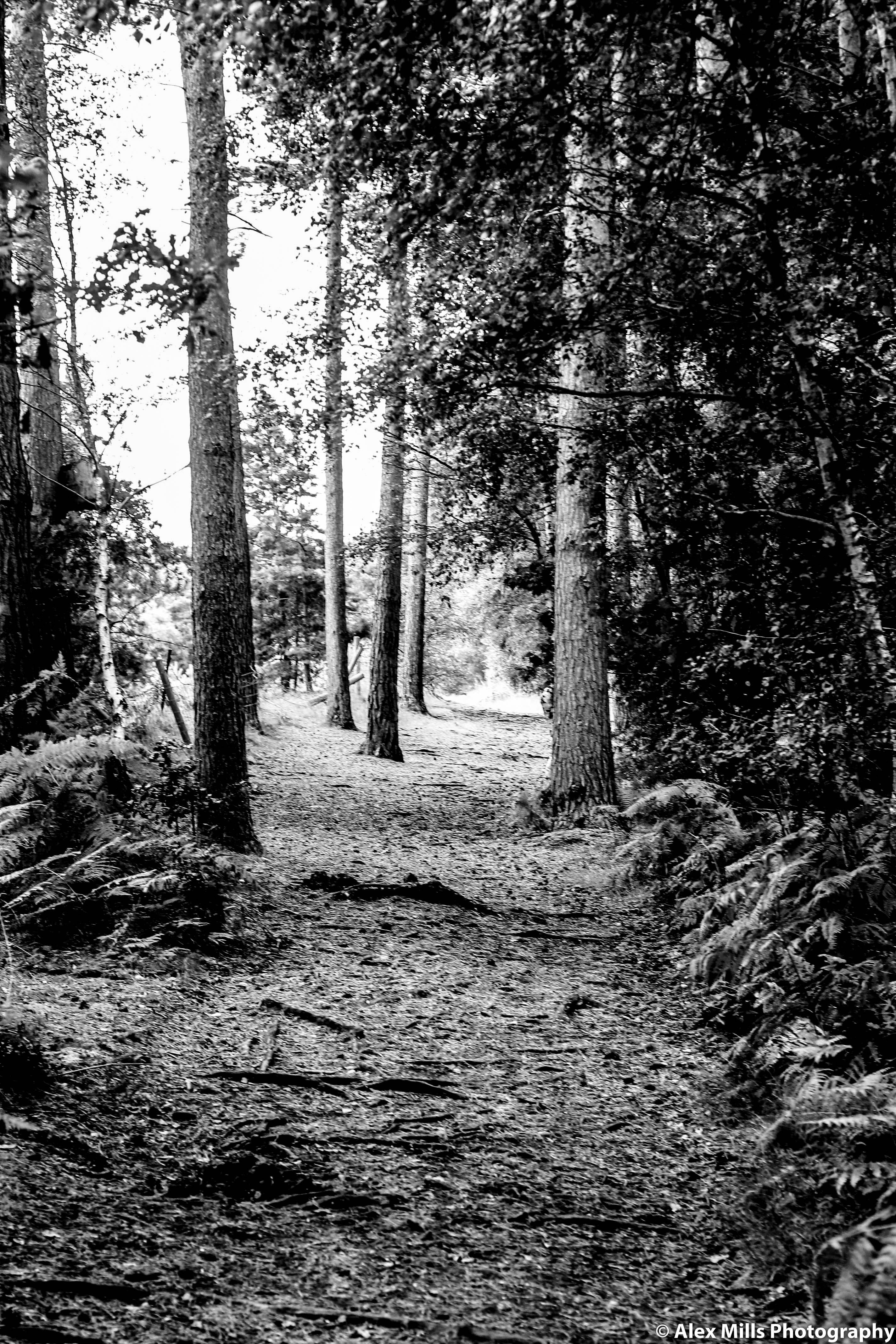 Cannock Chase - 50mm photography  #AlexMillsPhotography