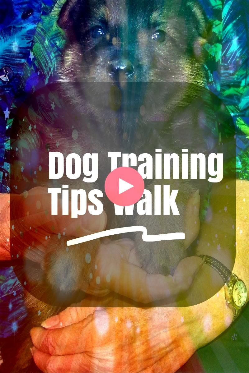 Few Dog Training Tips Walks Suggestions For Owner  Want to know more   Learn A Few Dog Training Tips Walks Suggestions For Owner  Want to know more   Learn A Few Dog Trai...