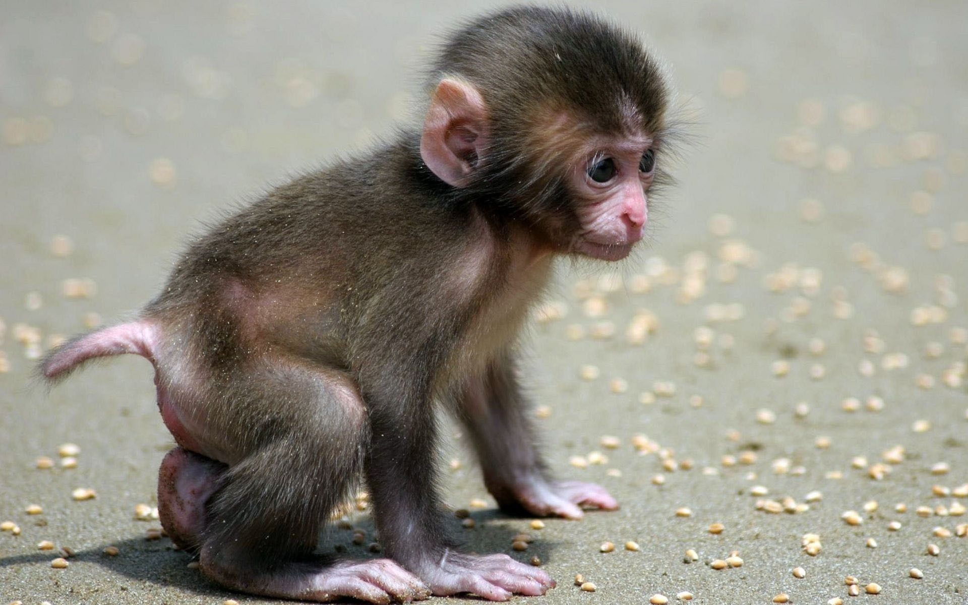 cute baby animals | Wallpaper, desktop, monkey, baby, search, animals, cute (#169207)