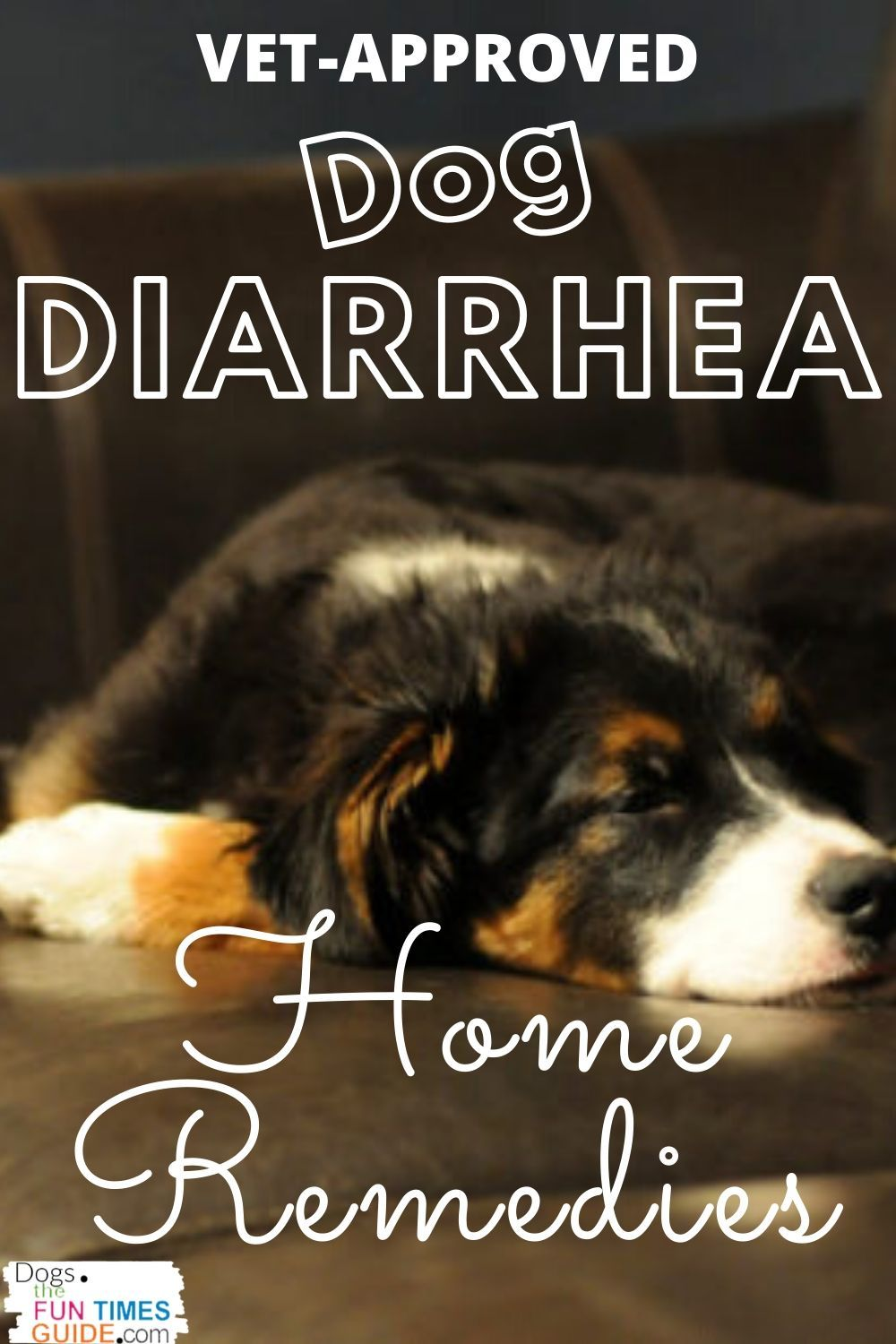 Dog Diarrhea Home Remedies That I Learned While Working