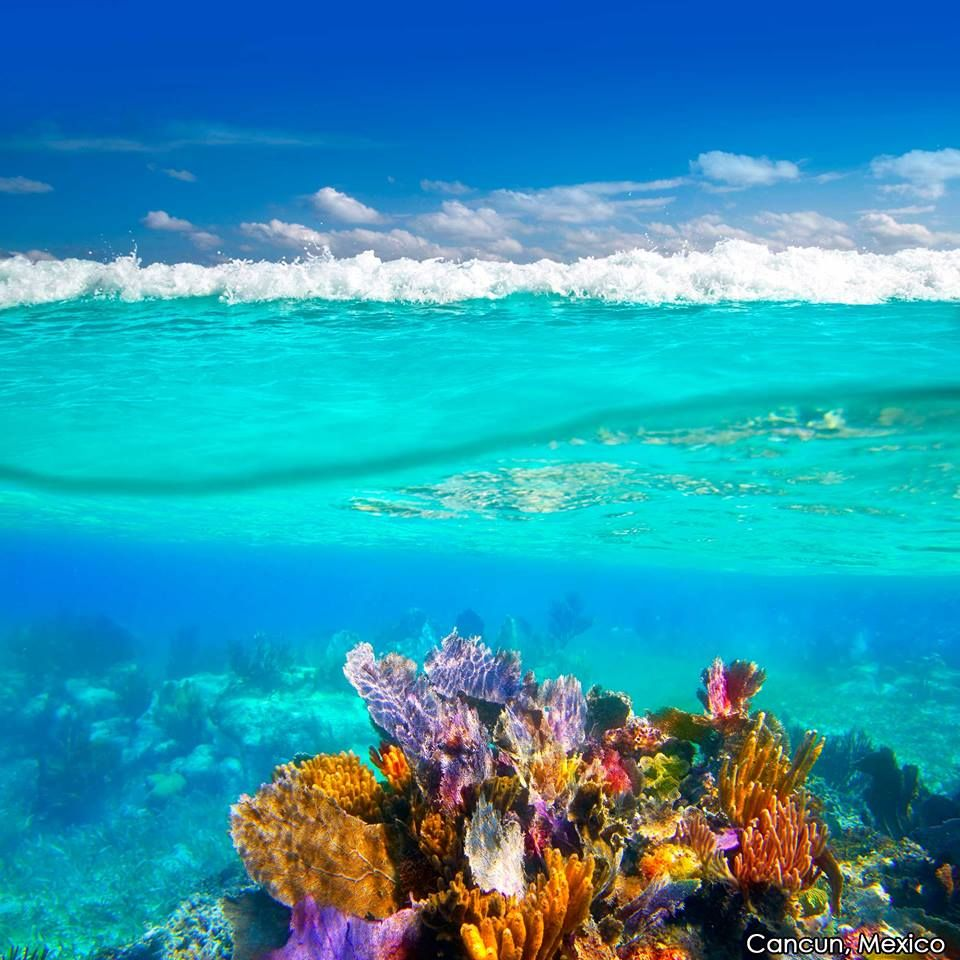 #DidYouKnow : Cancun's Great Maya Reef Is The Second