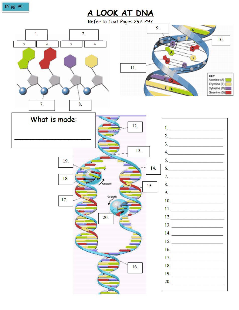 Alookatdna Doc Biology Worksheet Teaching Biology Biology Teacher [ 1232 x 952 Pixel ]