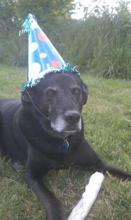 Best Of Craigslist Free Birthday Hat For A Dog Bellingham Wa