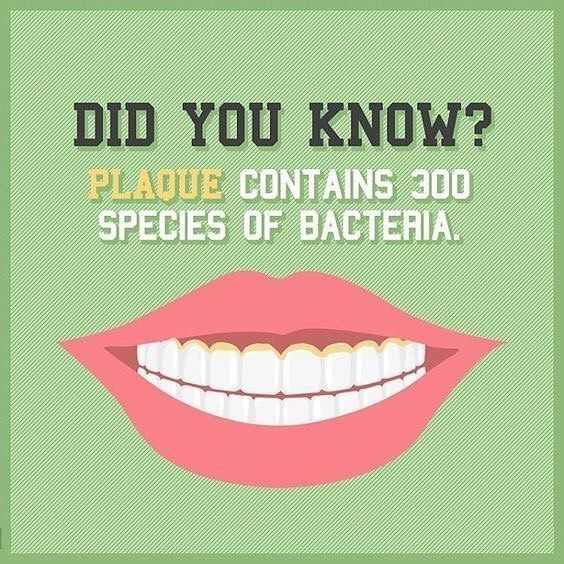 Teeth Are Fun: Plaque Isn't So Fun Though - Holistic Dentist Paige Woods