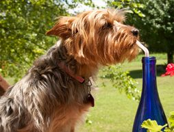 Stay Cool: Protecting Pets from Sweltering Summer Heat