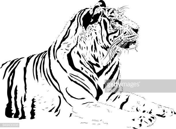 Dibujos De Caras De Tigres Para Colorear: Dibujo De Tigre De Bengala Para Colorear Dibujos De