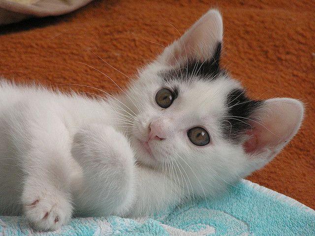 cute kitty :)))