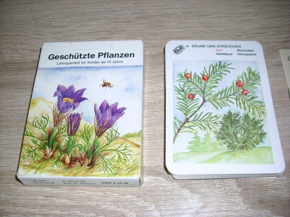 Geschützte Pflanzen Lehrquartett unbenutzte Karten Altenburg DDR TOP