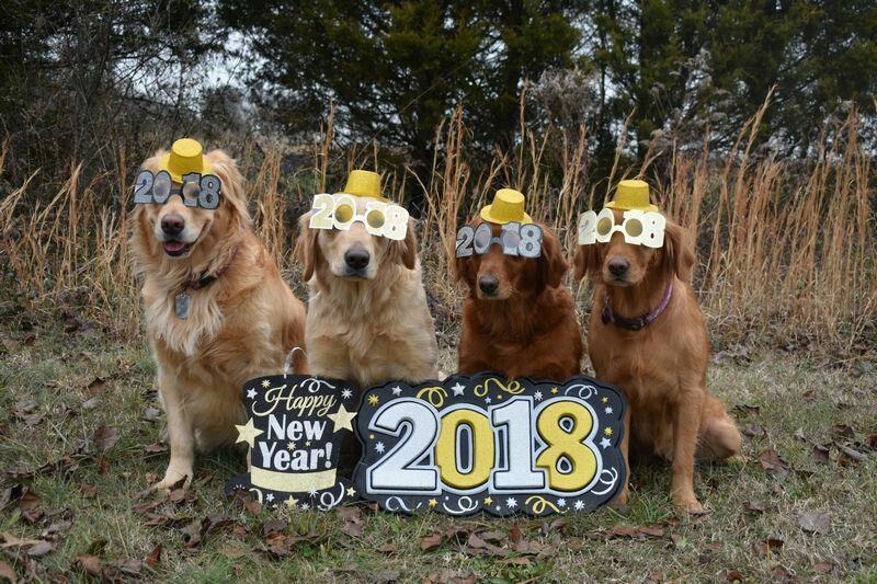 A Golden Retriever New Years Eve 2018 Dogs Golden Retriever Dog