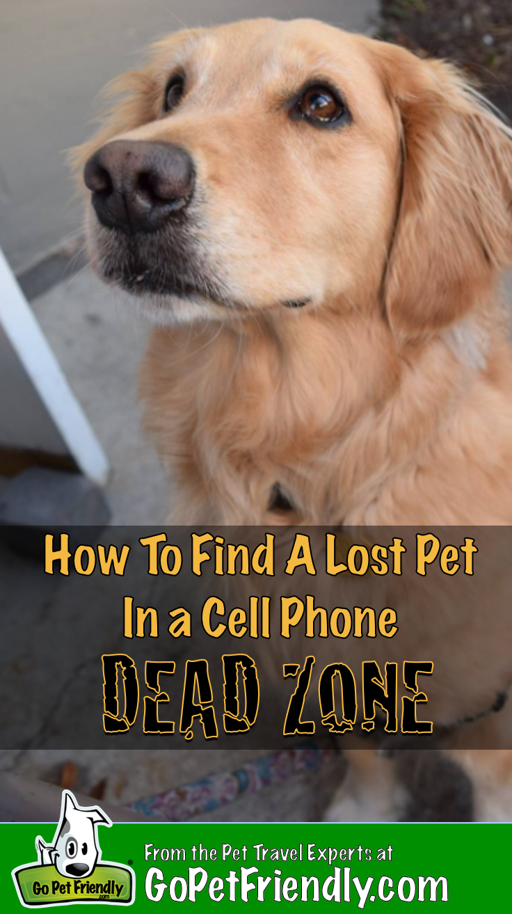 How To Find A Lost Dog In A Cell Phone Dead Zone With Images Losing A Dog Losing A Pet Cat Illnesses