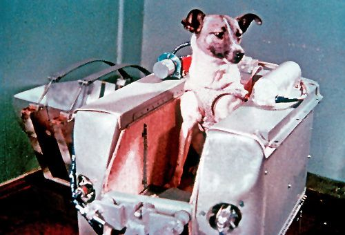Laika ~ the first animal in orbit and also the first animal to die while doing so. A stray dog, Laika proved that living organisms were capable of surviving the launch process and subsequent orbit and weightlessness. Laika's sacrifice was not her own choice; Laika's survival was never expected and the true nature of her death was covered up for years. : (