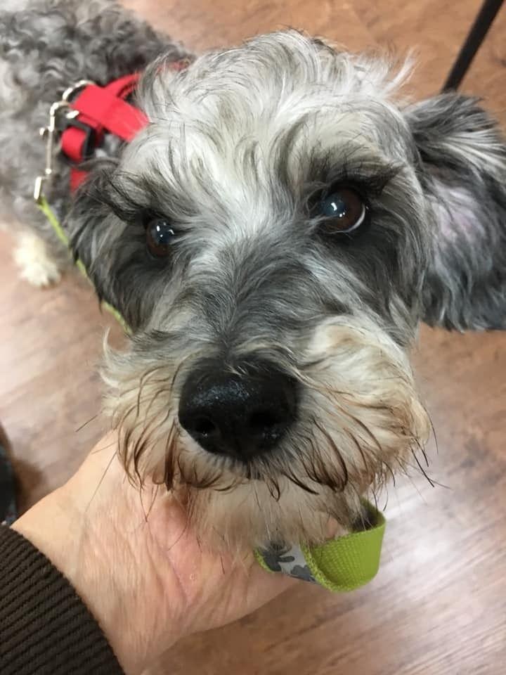 Adopt gordy on dog adoption adoption pets