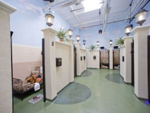 Most Luxurious Pet Hotels In Los Angeles Cbs Los Angeles Dog Boarding Kennels Luxury Dog Kennels Dog Boarding Facility