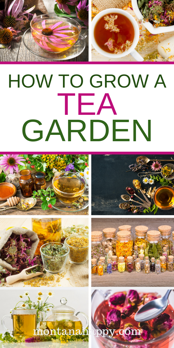 How to Grow Your Own Tea Garden is part of Garden plants design, Garden plants, Tea garden, Container herb garden, Vegetable garden, Container gardening - How to Grow Your Own Tea Garden will show you how easy it is to have the ingredients for your favorite teas just outside your door  Who knew it would be so easy