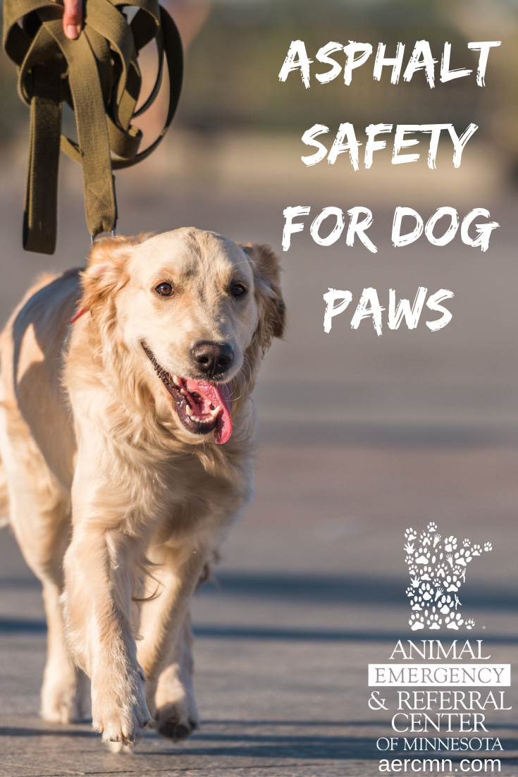 Asphalt Safety For Dog Paws Dog Paws Dogs City Pets