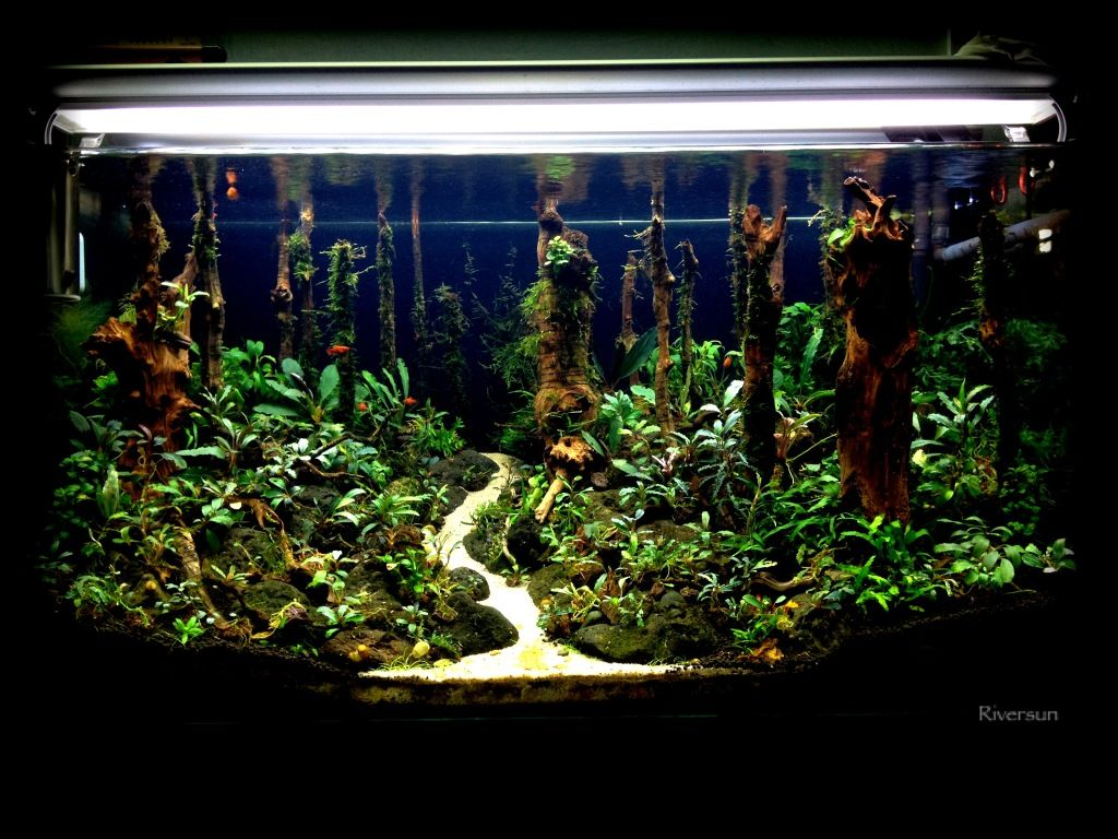 Riversunus the forest the planted tank aquascaping
