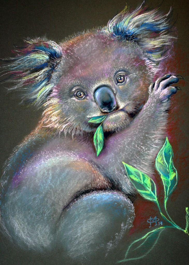 Pin By Dorothy Fencl On Koala Bears Pinterest Baby Koala