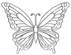 Butterfly Colouring Pages Google Search Butterfly Coloring Page Butterfly Drawing Coloring Pages