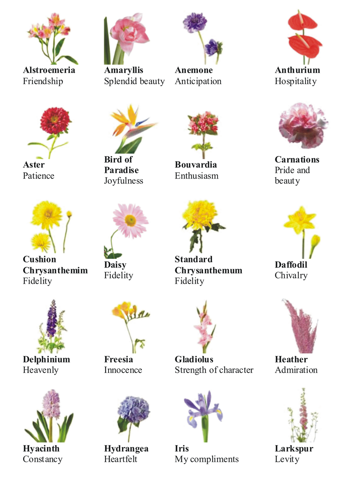 flower chart know what your wedding flowers mean wedding pinterest noms de fleurs fleur. Black Bedroom Furniture Sets. Home Design Ideas