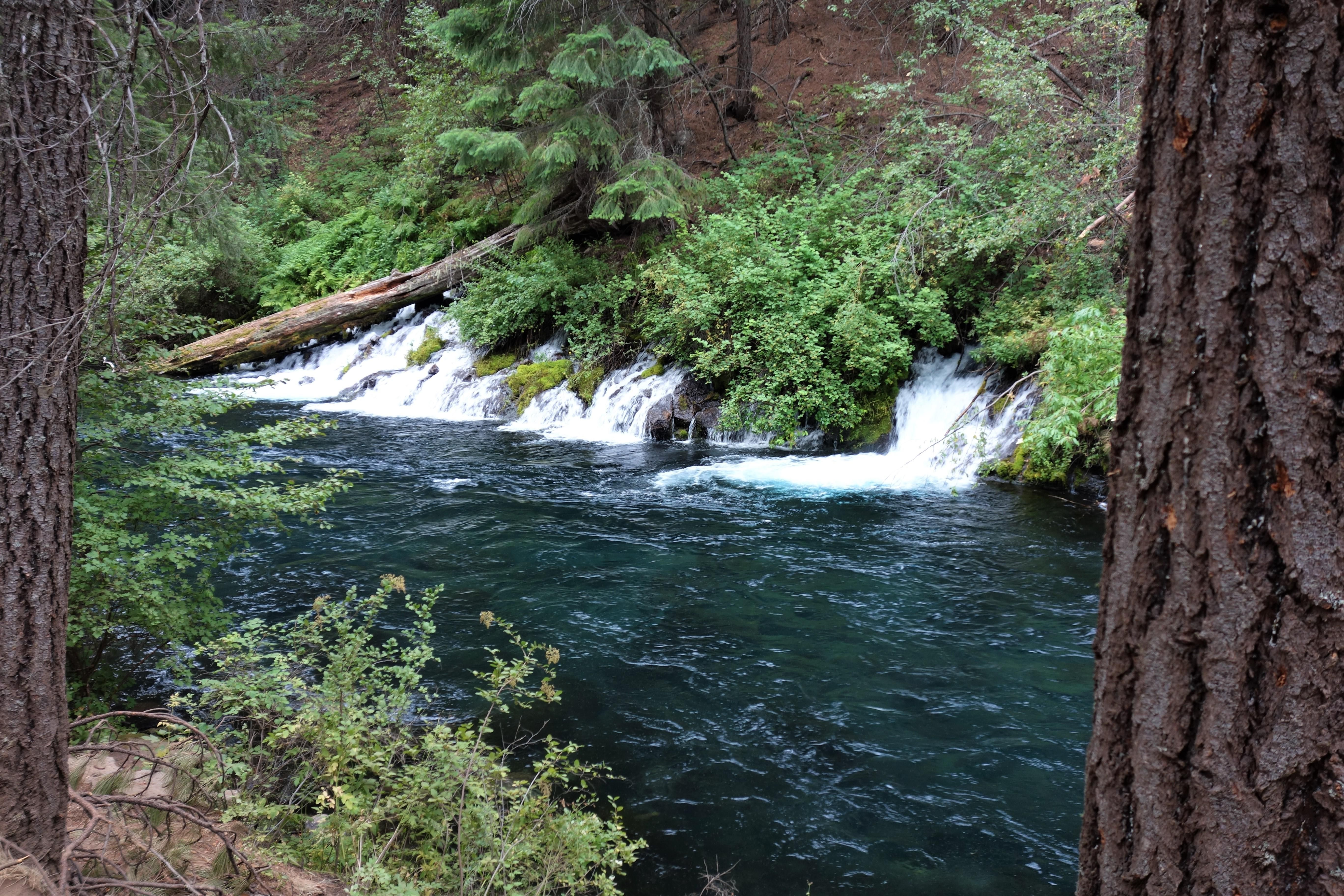 Spring water gushing from the hillside into the metolius river
