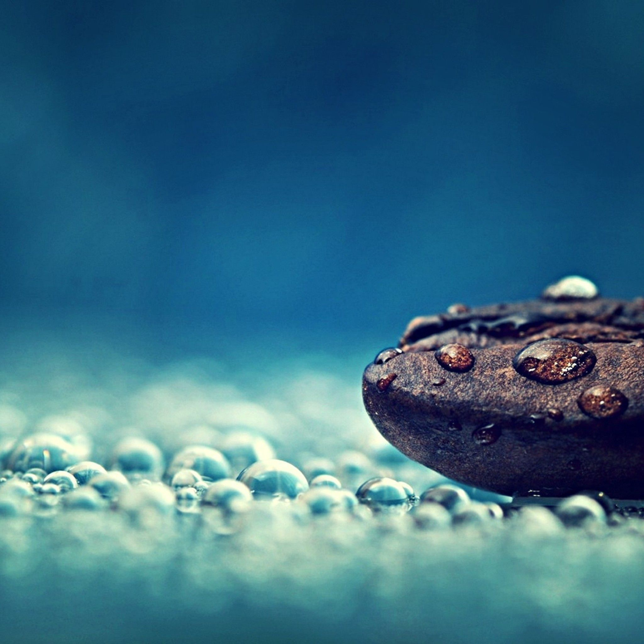 A Coffee Bean In The Rain Drops Tap To See Beautiful Abstract Nature Micro Wallpapers Mobile9 Nature Wallpaper Wallpaper Abstract Nature