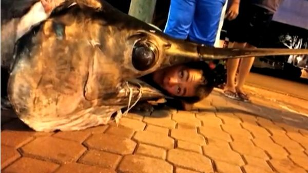 Catch of the day: Teen reels in nearly 700-pound swordfish | kwgn.com