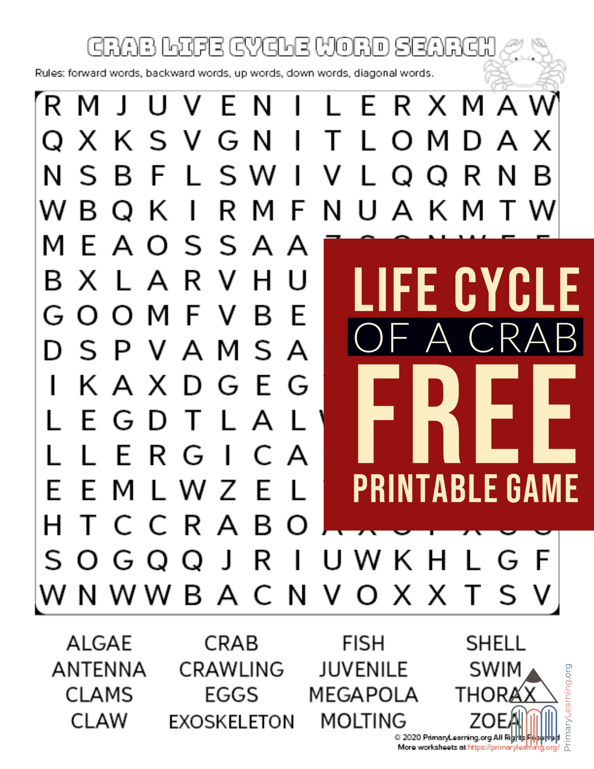 Crab Life Cycle Word Search