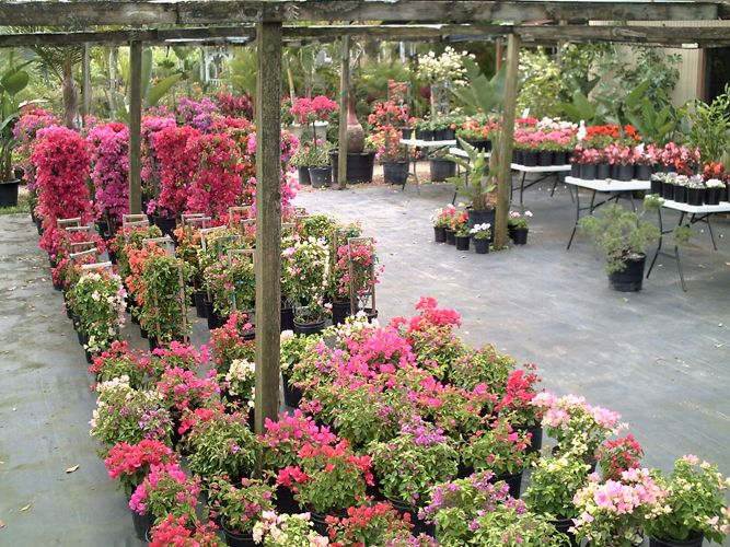 Palm Gardens Nursery 4761 Judge Rd Orlando Fl 32812