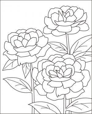 12月 塗り絵 無料 花 の画像検索結果 塗り絵 無料 塗り絵 無料