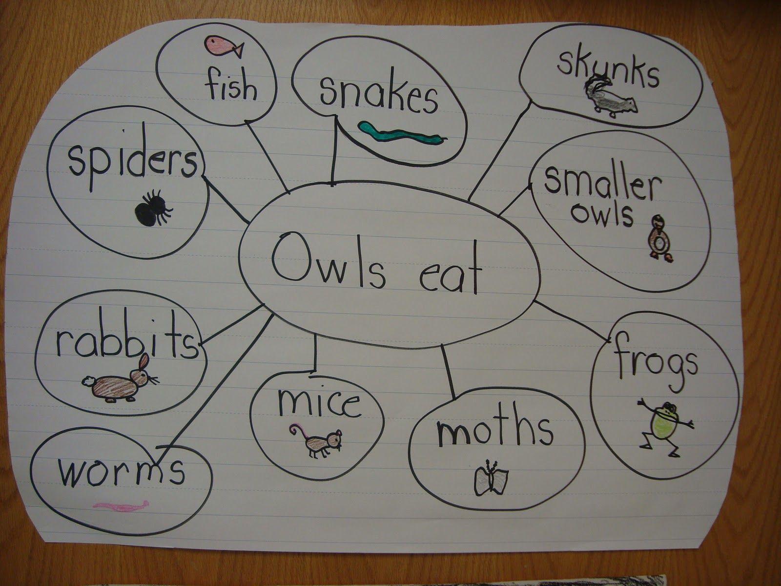 Owl Vocabulary