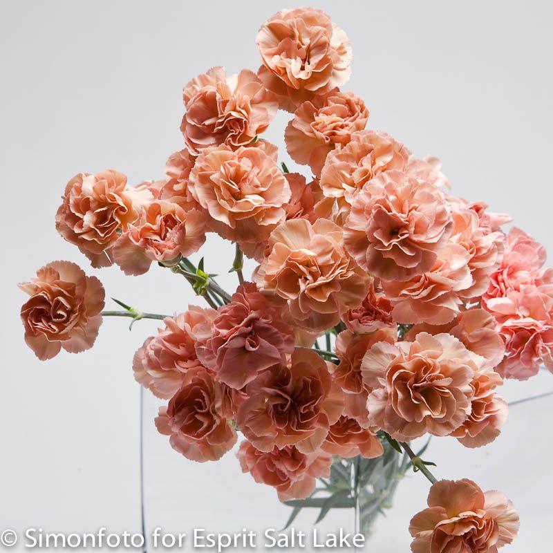 Best 25  Carnation bridesmaid bouquet ideas on Pinterest ...