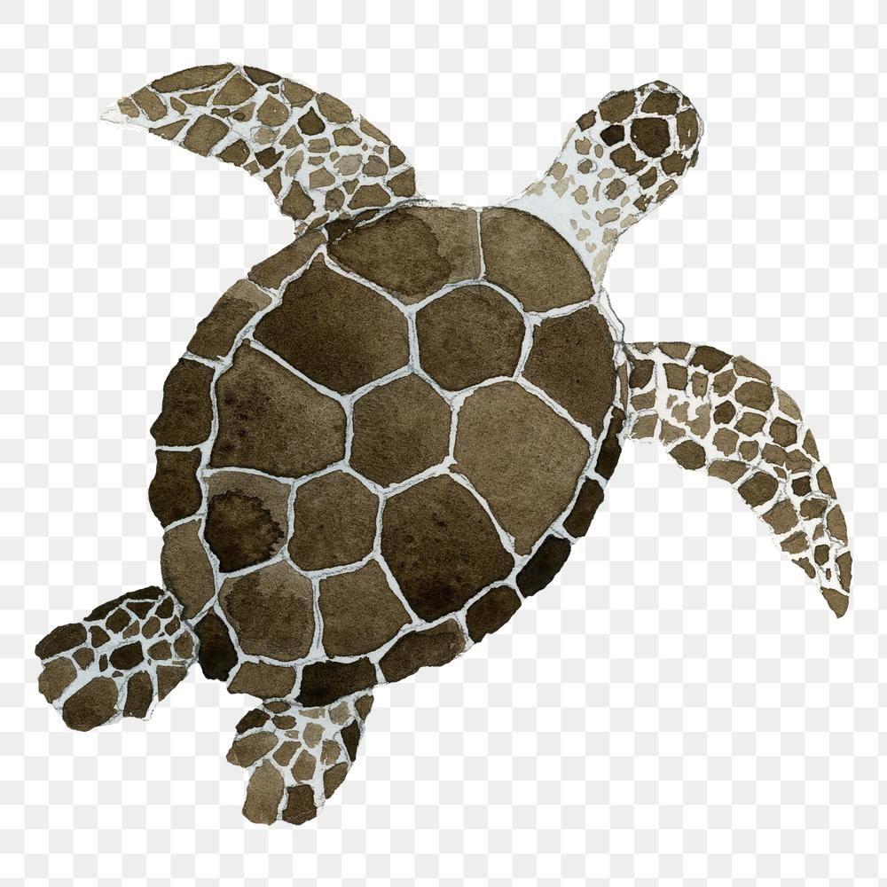 Watercolor Painted Sea Turtle Transparent Png Premium Image By Rawpixel Com Niwat Sea Turtle Pictures Sea Turtle Watercolor Turtle