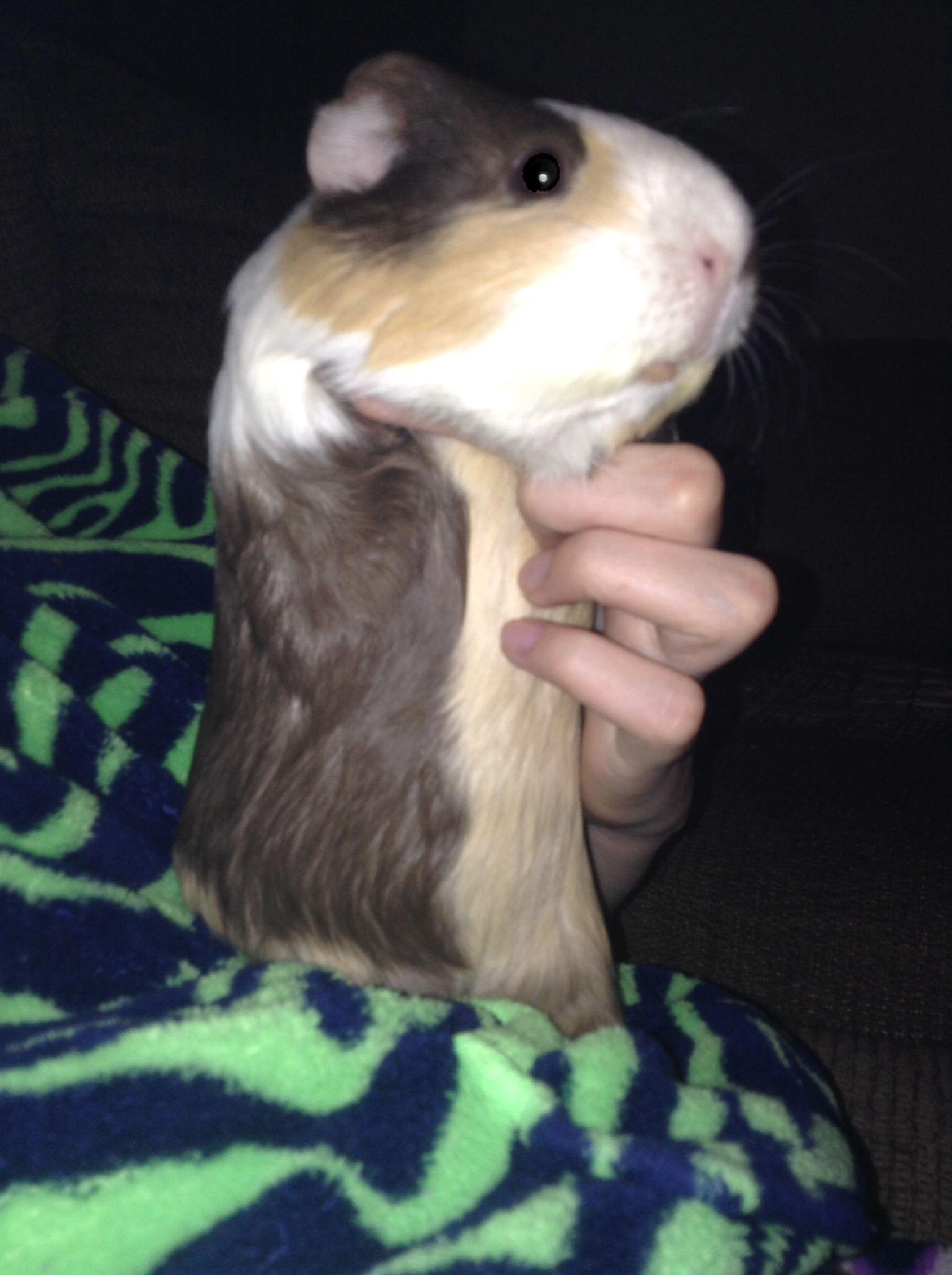 Willows tummy