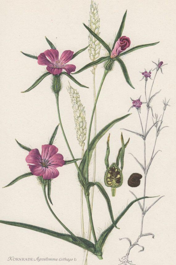 1954-neguilla Vintage botánico impresión litografía por Craftissimo