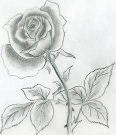 Draw Beautiful Roses Importance For Learning Flower Drawing And Also Teaching You To Draw Flower Drawing Nature Drawing Flower Sketches